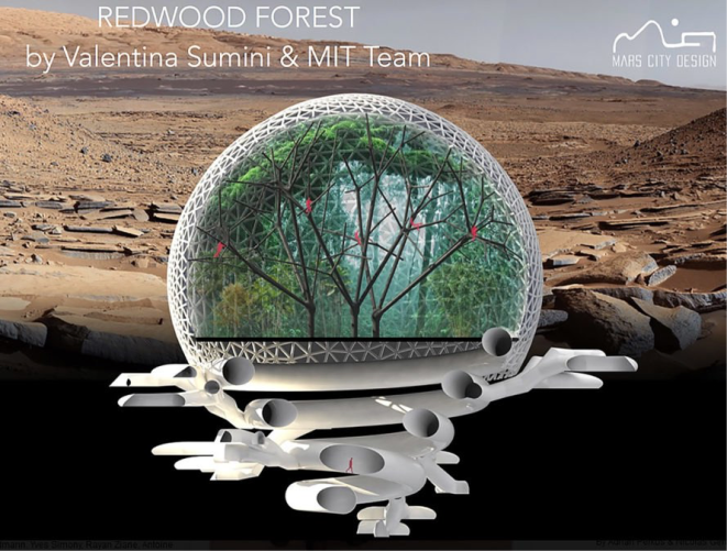 Forest dome 2